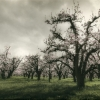 © Kelli Knack - Storm Clouds Over the Orchard